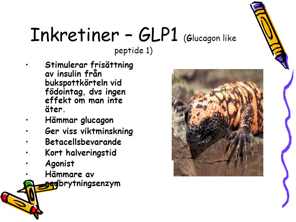 Inkretiner – GLP1 (Glucagon like peptide 1)