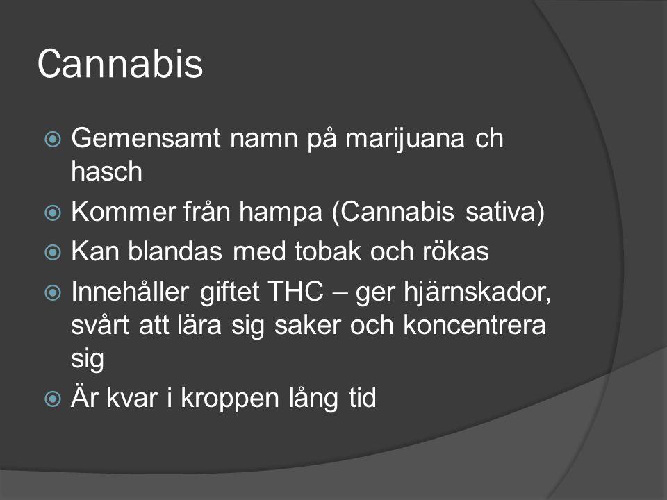 Cannabis Gemensamt namn på marijuana ch hasch