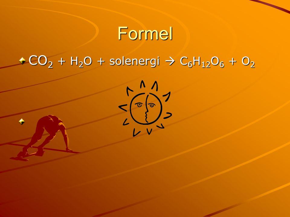 Formel CO2 + H2O + solenergi  C6H12O6 + O2