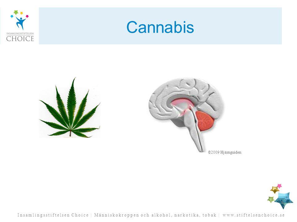 Cannabis ©2009 Hjärnguiden. THC´s effekt på hippocampus kan förklara de minnesproblem som kan utvecklas av cannabisanvändning.