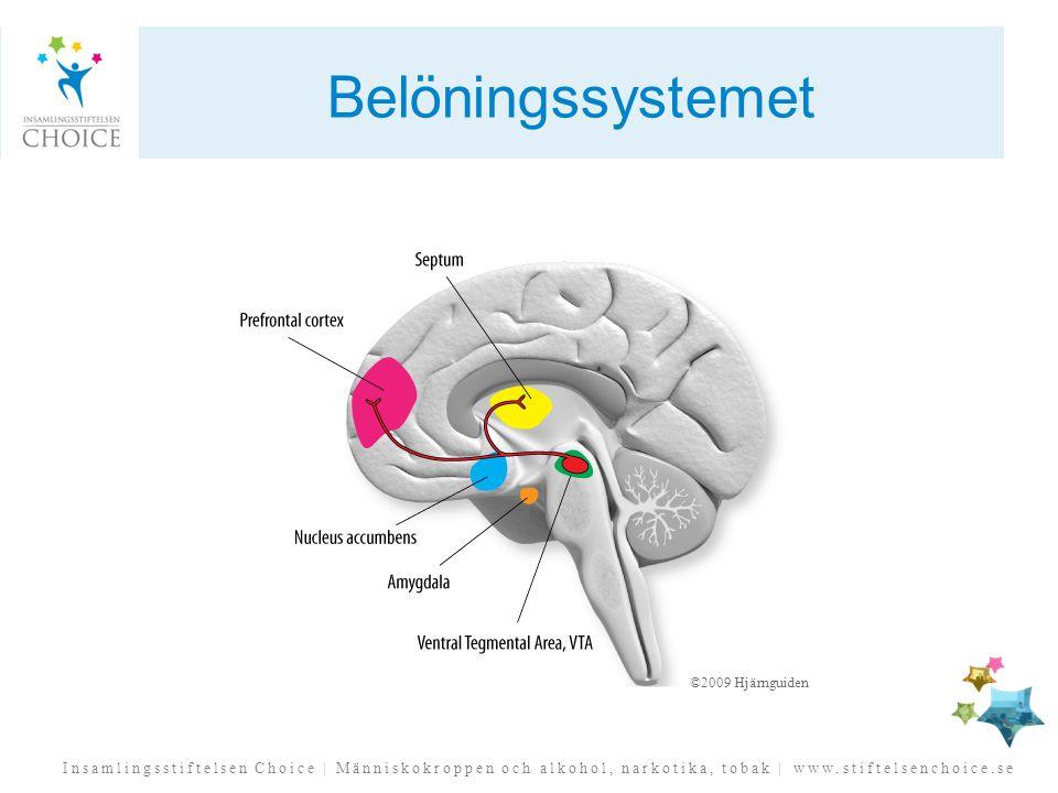 Belöningssystemet ©2009 Hjärnguiden