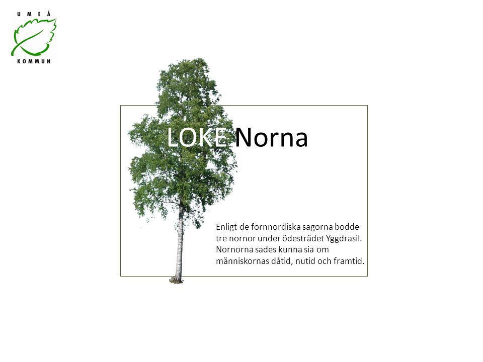 LOKE Norna