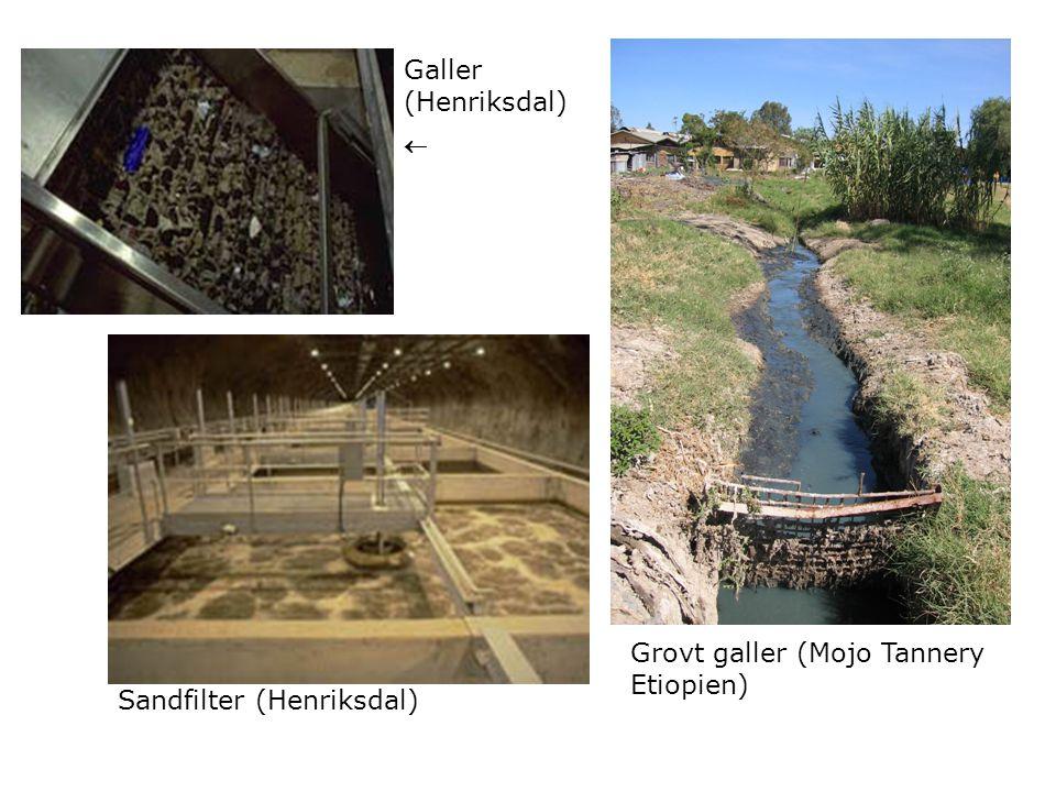 Grovt galler (Mojo Tannery Etiopien) Galler (Henriksdal)
