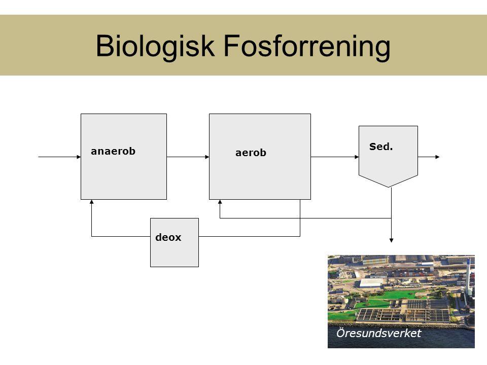Biologisk Fosforrening