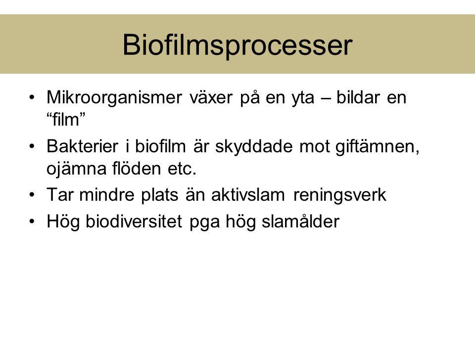 Biofilmsprocesser Mikroorganismer växer på en yta – bildar en film