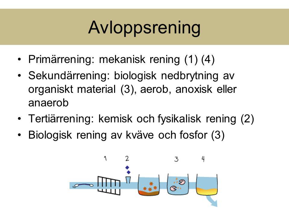 Avloppsrening Primärrening: mekanisk rening (1) (4)