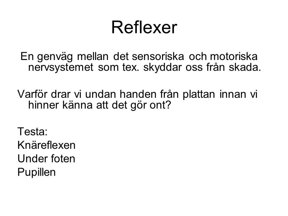 Reflexer En genväg mellan det sensoriska och motoriska nervsystemet som tex. skyddar oss från skada.