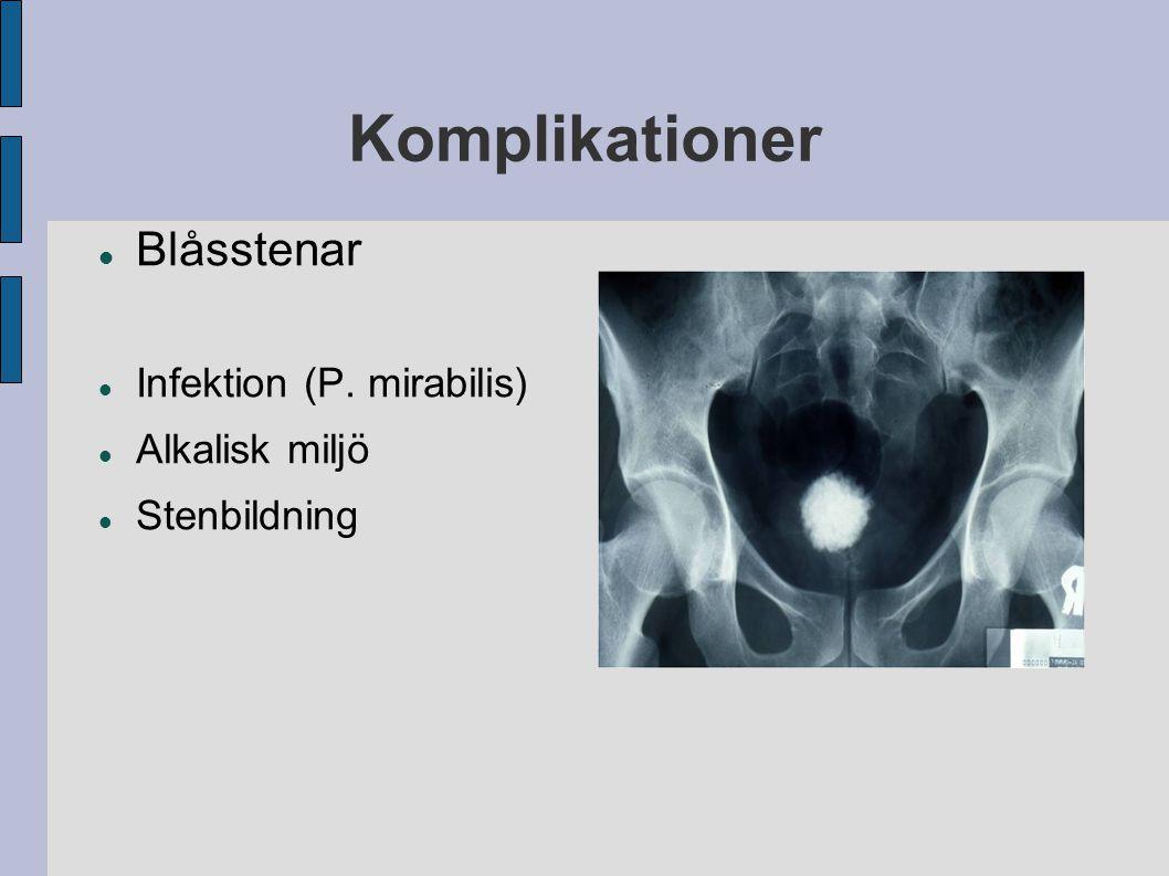 Komplikationer Blåsstenar Infektion (P. mirabilis) Alkalisk miljö