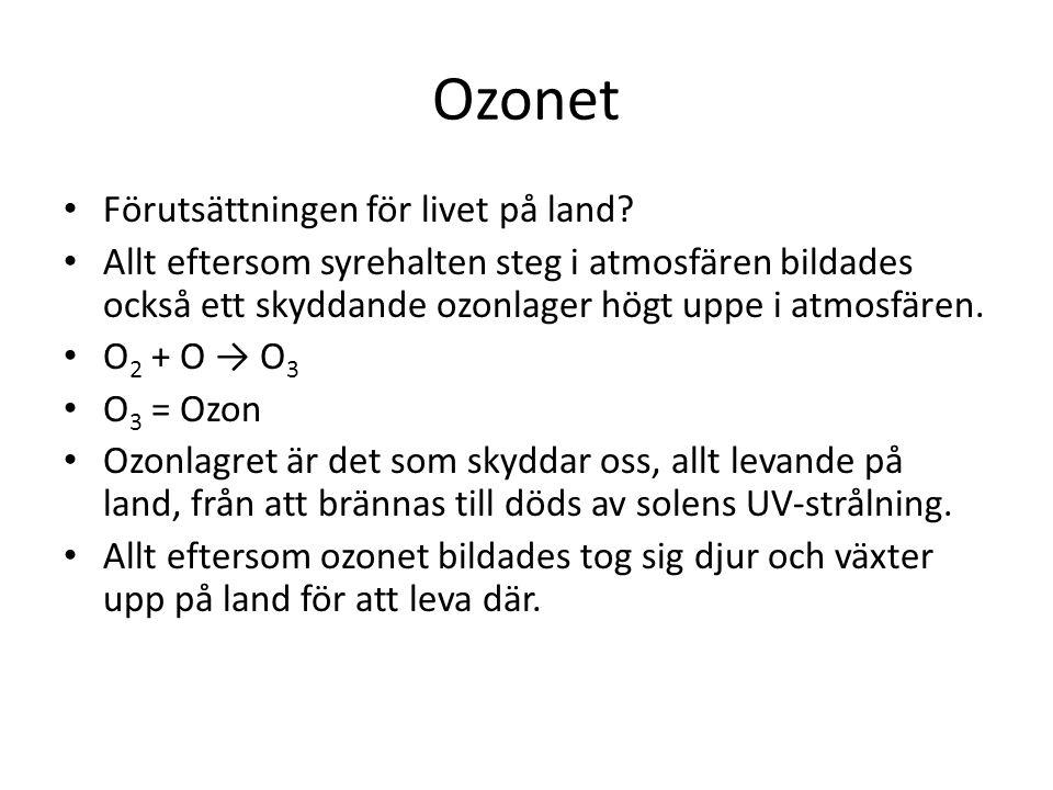 Ozonet Förutsättningen för livet på land