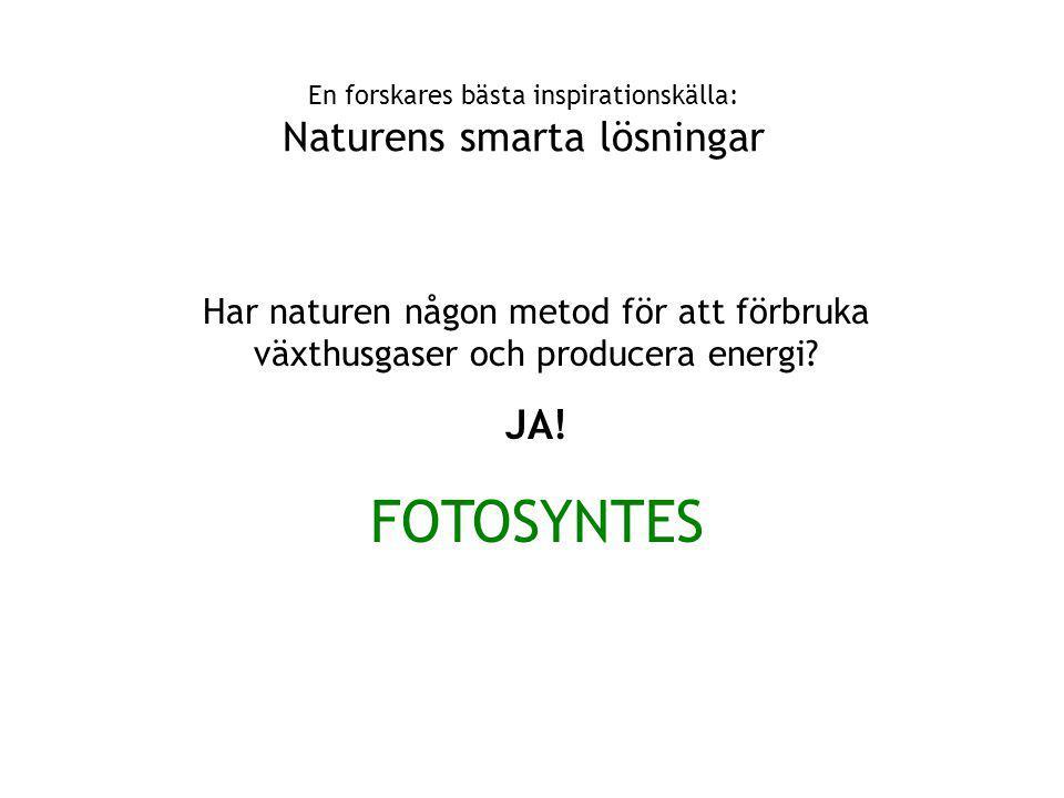 En forskares bästa inspirationskälla: Naturens smarta lösningar