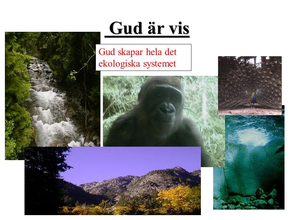 Gud är vis Gud skapar hela det ekologiska systemet