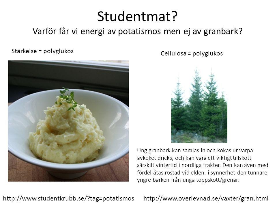 Studentmat Varför får vi energi av potatismos men ej av granbark