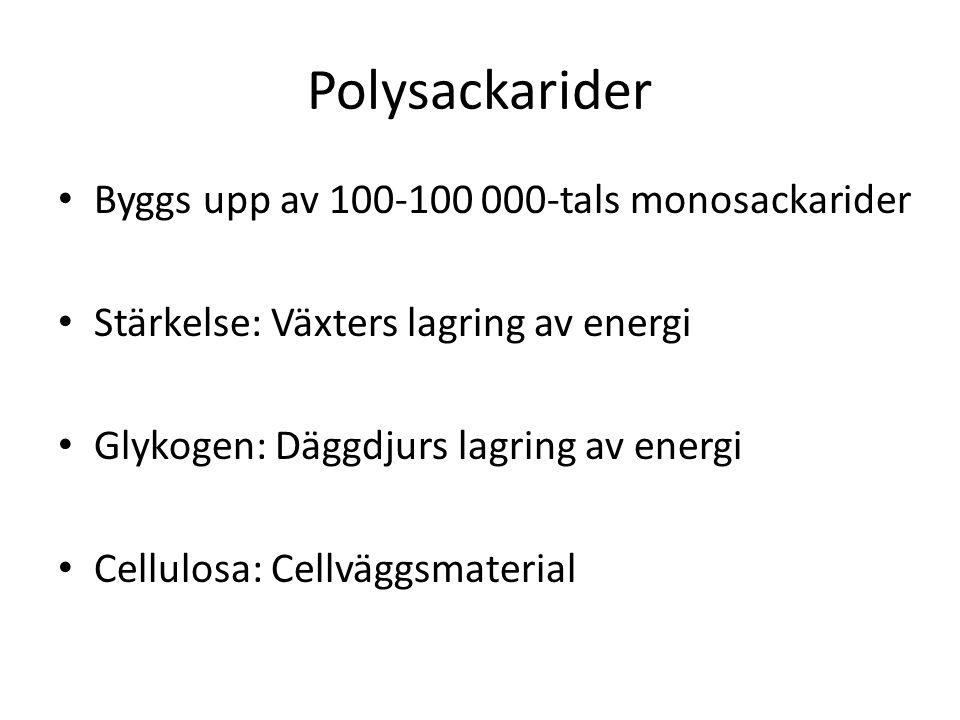 Polysackarider Byggs upp av 100-100 000-tals monosackarider
