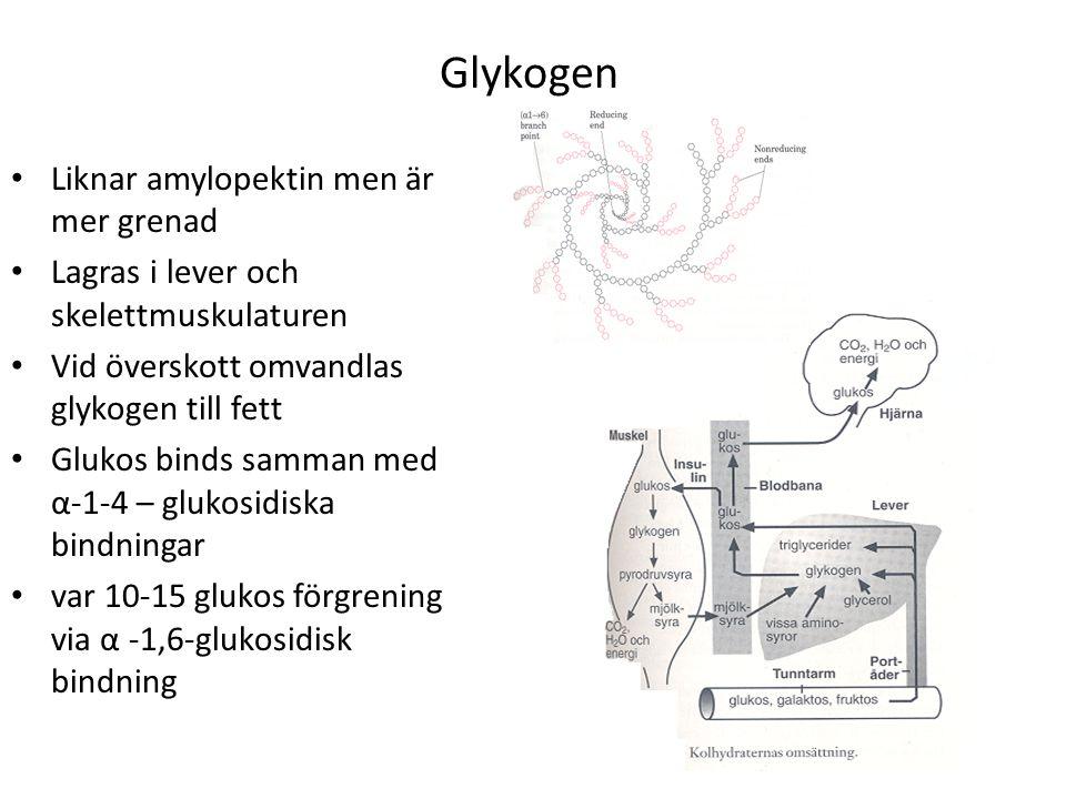 Glykogen Liknar amylopektin men är mer grenad