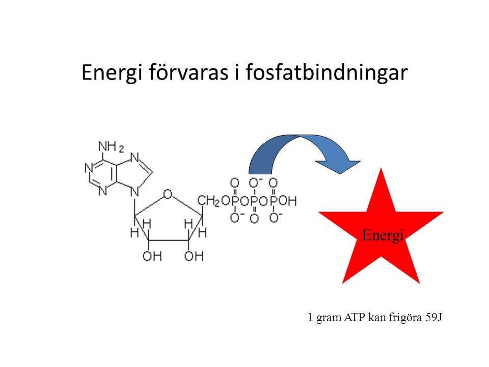 Energi förvaras i fosfatbindningar