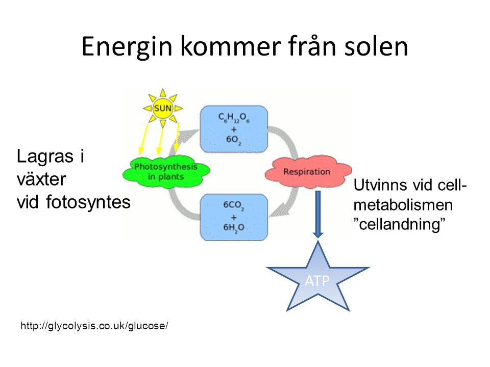 Energin kommer från solen