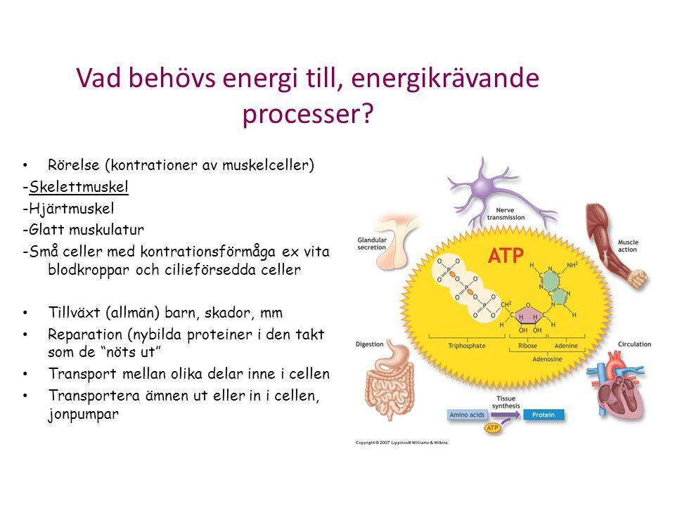 Vad behövs energi till, energikrävande processer