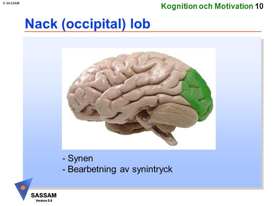 Nack (occipital) lob - Synen - Bearbetning av synintryck