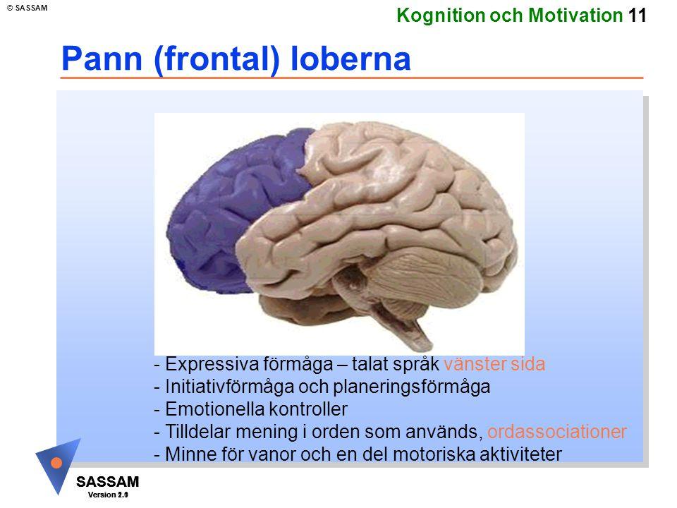 Pann (frontal) loberna