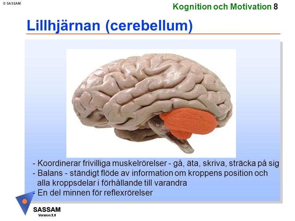 Lillhjärnan (cerebellum)