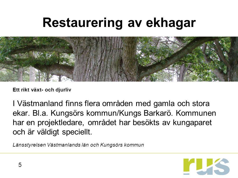 Restaurering av ekhagar