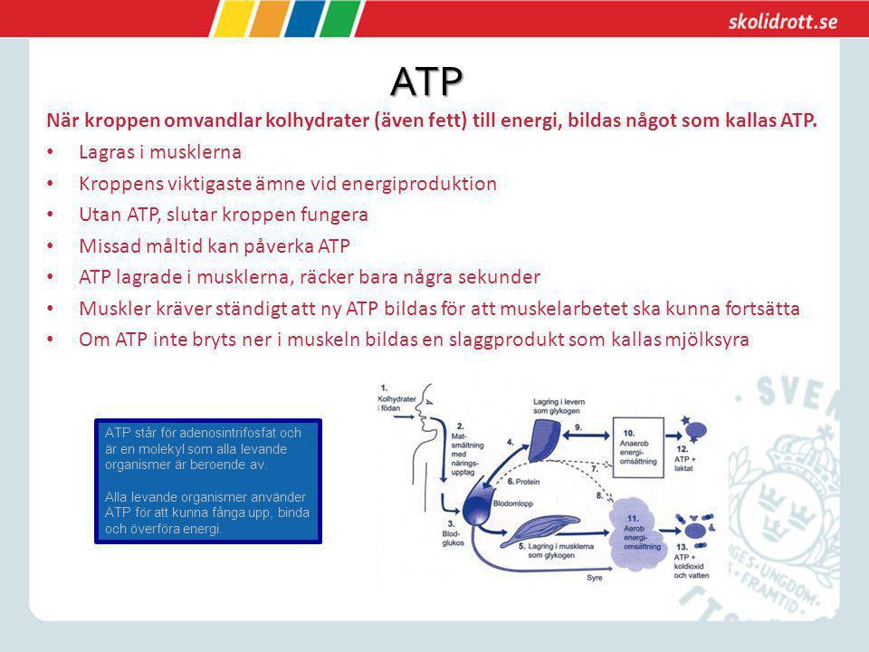 ATP När kroppen omvandlar kolhydrater (även fett) till energi, bildas något som kallas ATP. Lagras i musklerna.