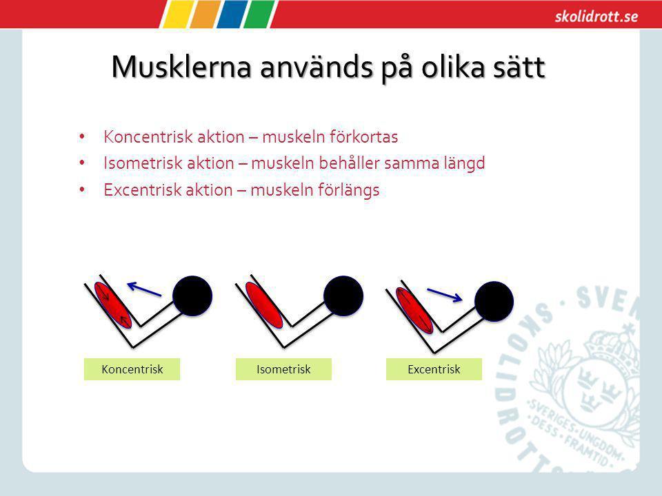 Musklerna används på olika sätt