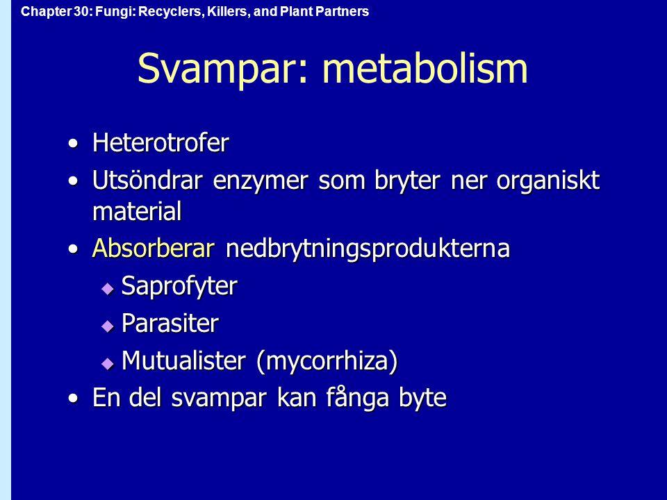 Svampar: metabolism Heterotrofer