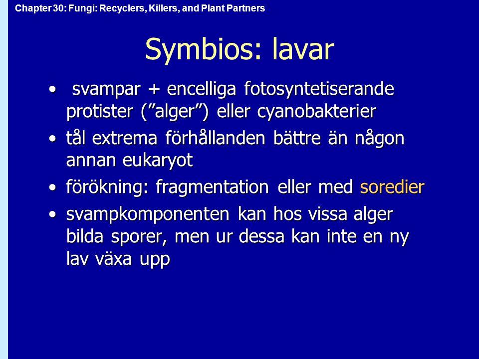 Symbios: lavar svampar + encelliga fotosyntetiserande protister ( alger ) eller cyanobakterier.