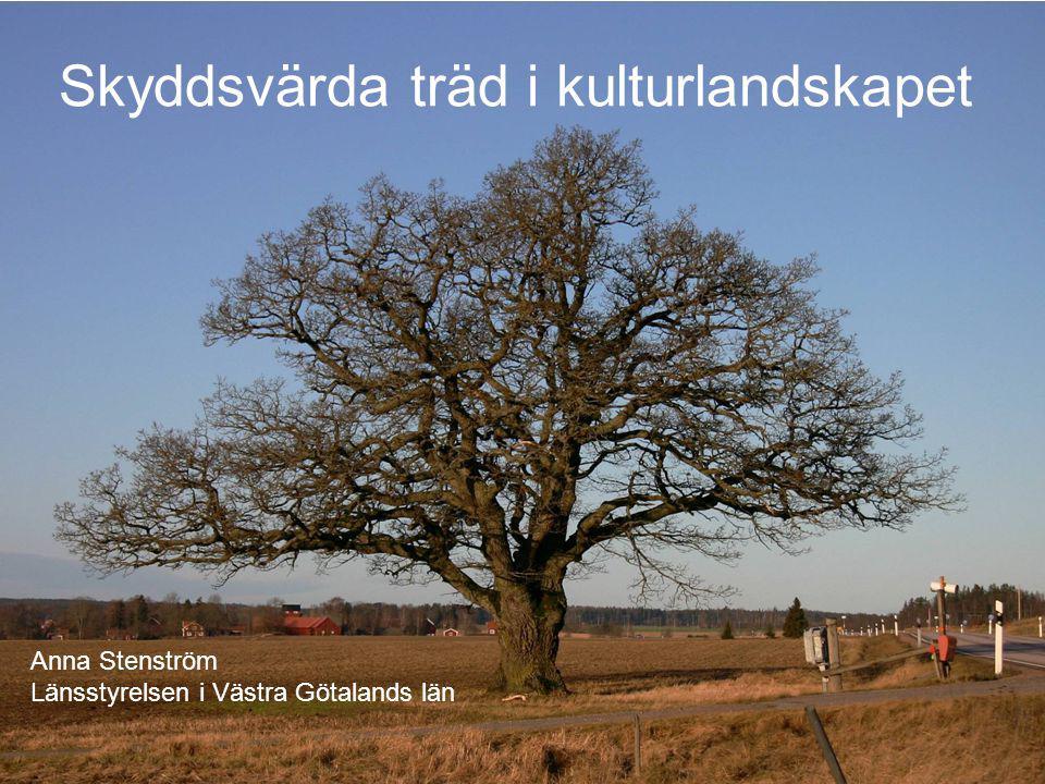 Skyddsvärda träd i kulturlandskapet