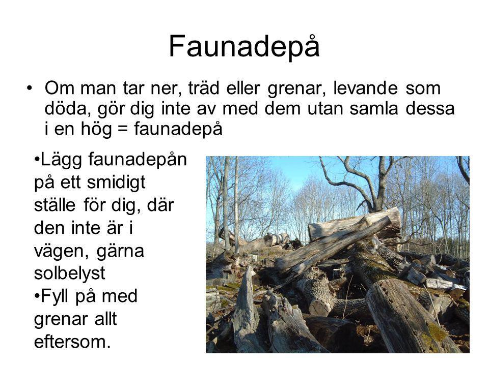 Faunadepå Om man tar ner, träd eller grenar, levande som döda, gör dig inte av med dem utan samla dessa i en hög = faunadepå.
