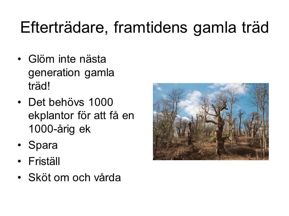 Efterträdare, framtidens gamla träd