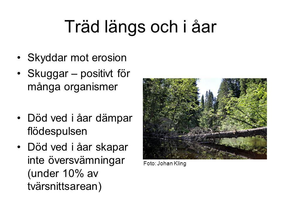 Träd längs och i åar Skyddar mot erosion