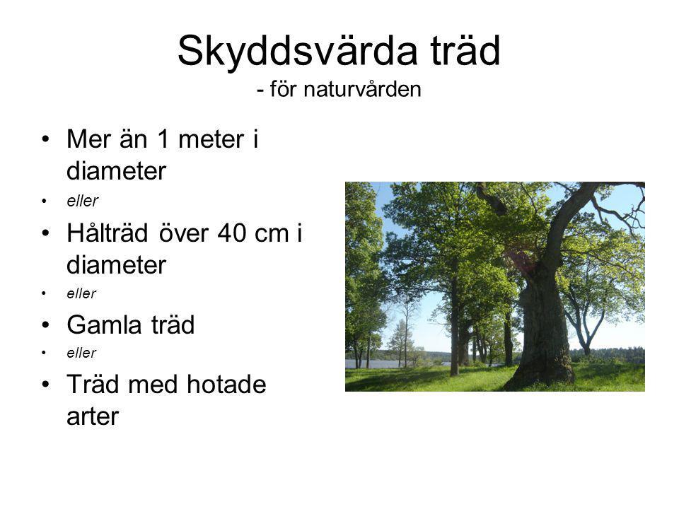 Skyddsvärda träd - för naturvården