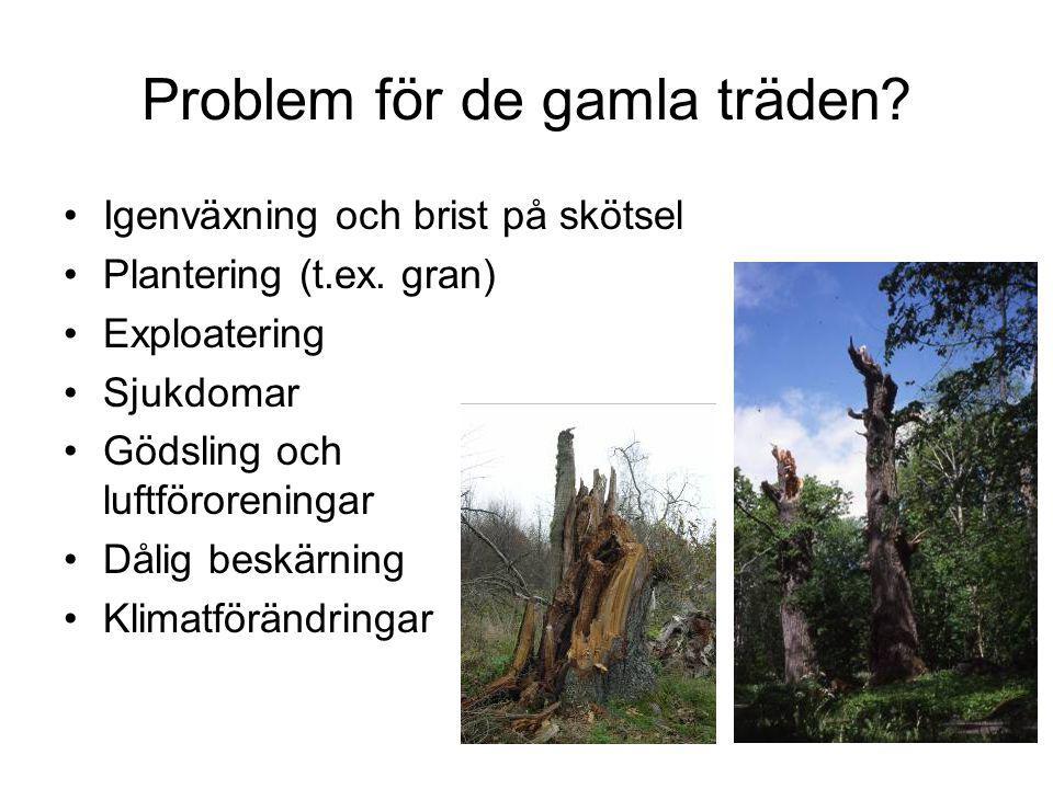 Problem för de gamla träden