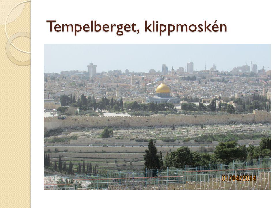 Tempelberget, klippmoskén