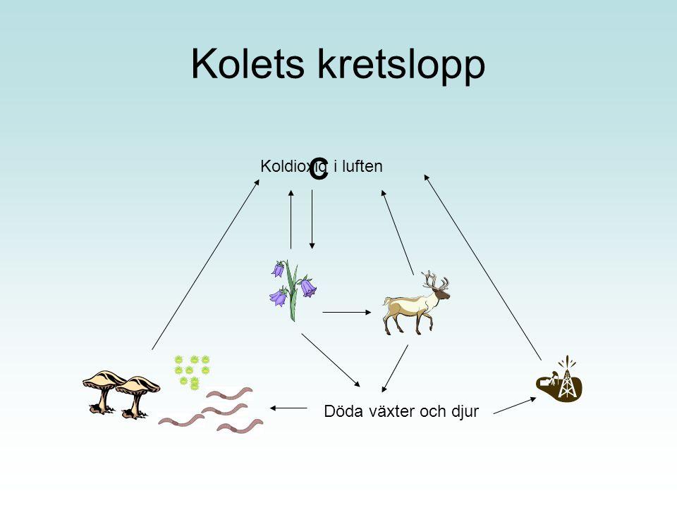 Kolets kretslopp C Koldioxid i luften Döda växter och djur