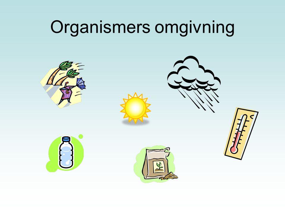 Organismers omgivning