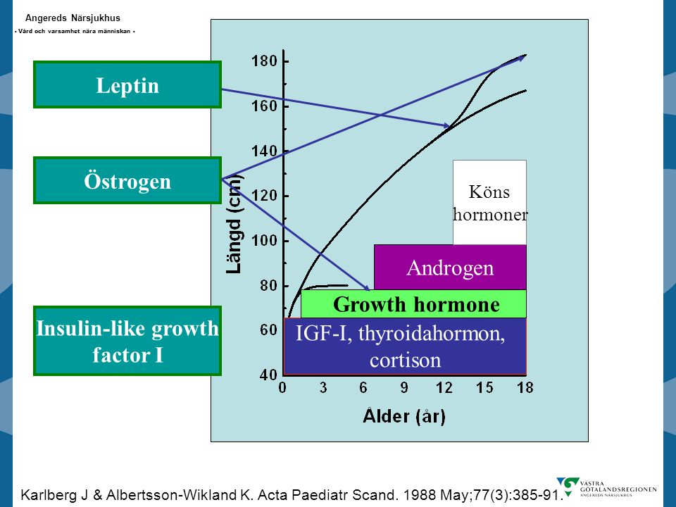 Leptin Östrogen Growth hormone Insulin-like growth factor I