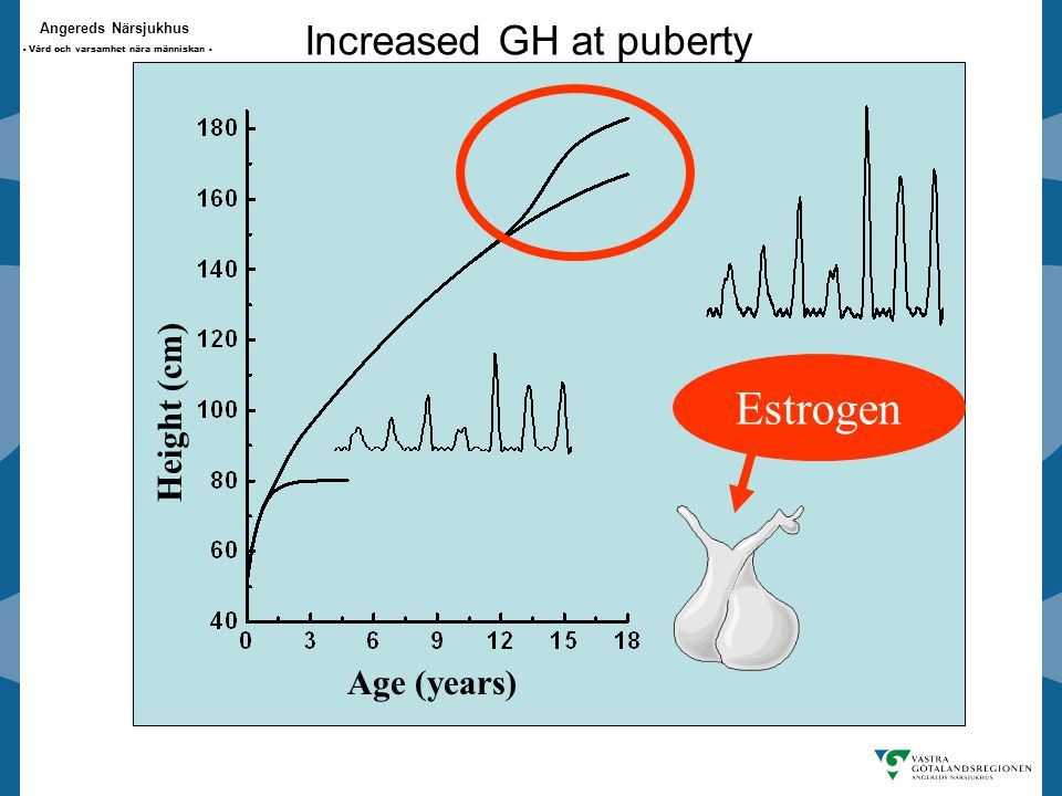 Increased GH at puberty