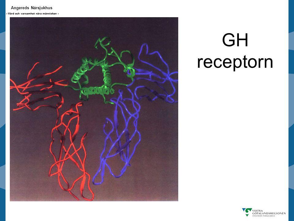 GH receptorn