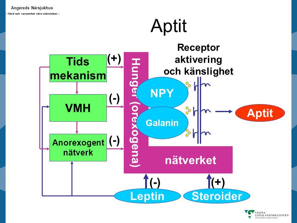 Aptit (+) Hunger (orexogena) nätverket Tids mekanism NPY (-) VMH Aptit