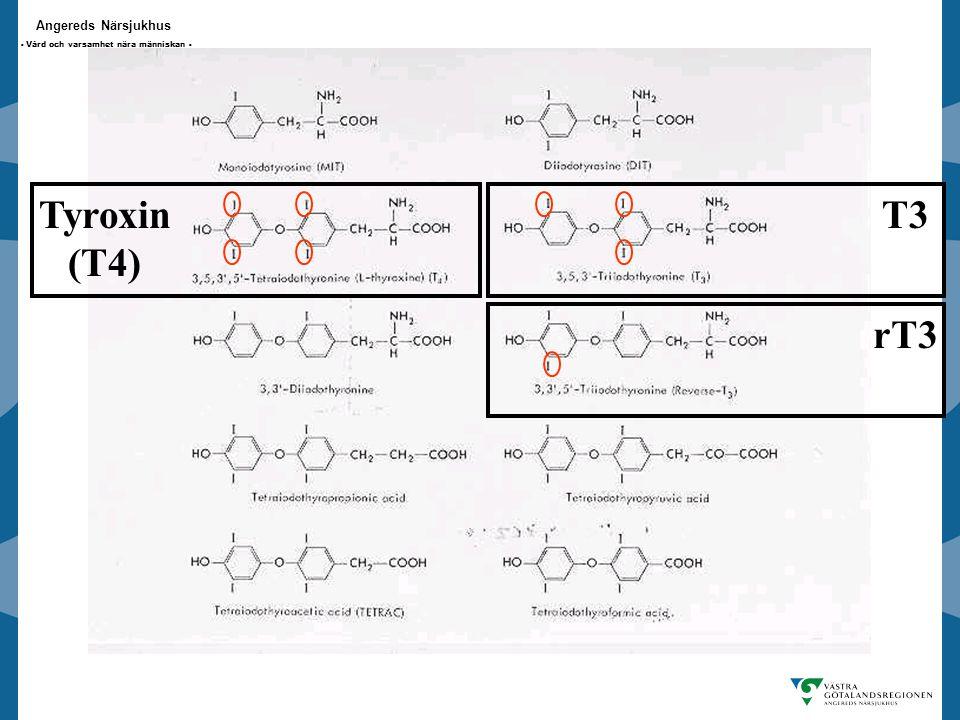 Tyroxin (T4) T3 rT3