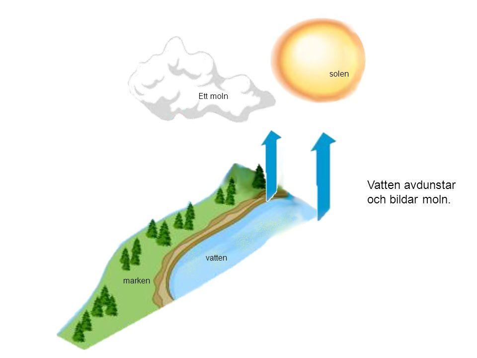 Vatten avdunstar och bildar moln.