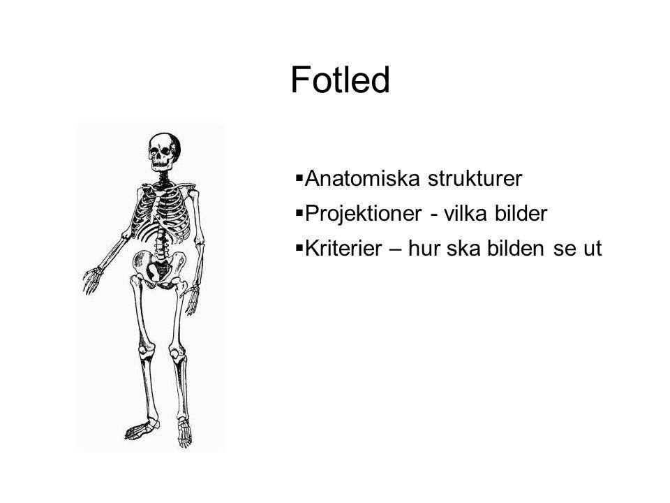 Fotled Anatomiska strukturer Projektioner - vilka bilder