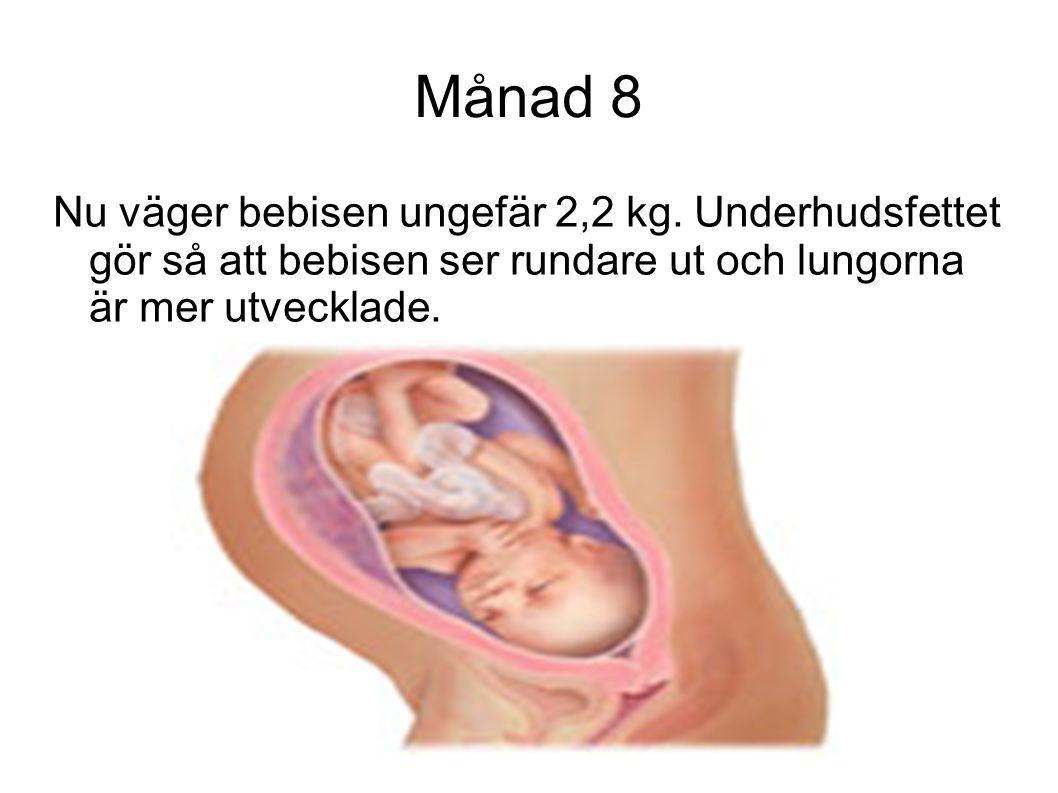 Månad 8 Nu väger bebisen ungefär 2,2 kg.