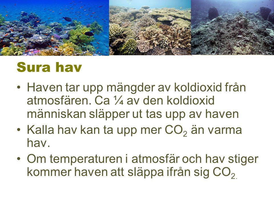 Sura hav Haven tar upp mängder av koldioxid från atmosfären. Ca ¼ av den koldioxid människan släpper ut tas upp av haven.