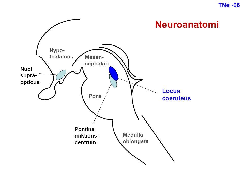 Neuroanatomi TNe -06 Locus coeruleus Hypo- thalamus Mesen- cephalon