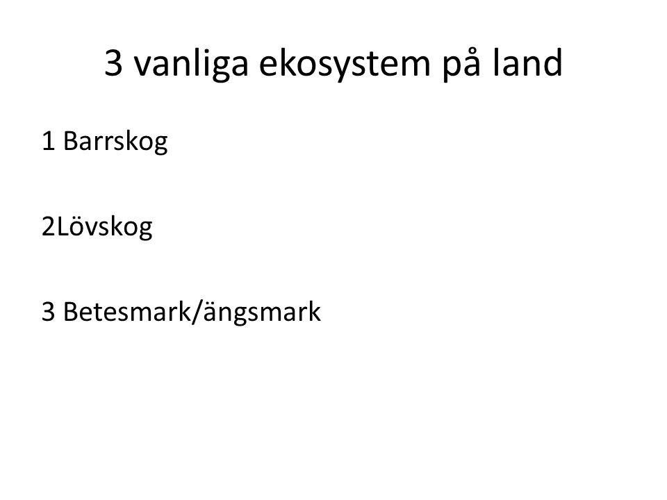 3 vanliga ekosystem på land