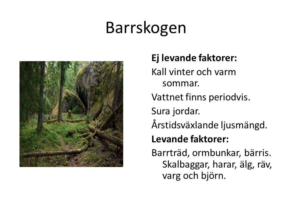 Barrskogen